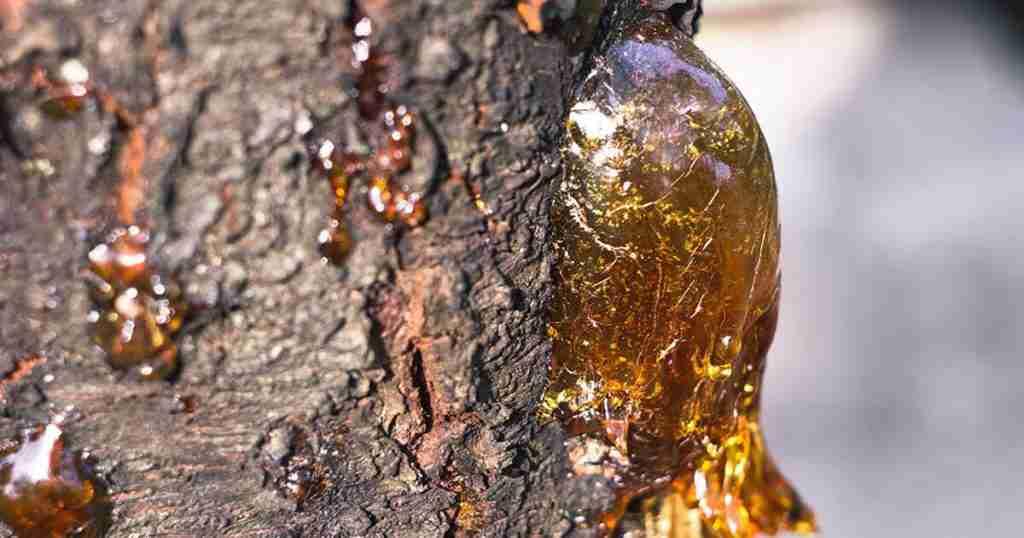 Origini dell'ambra baltica
