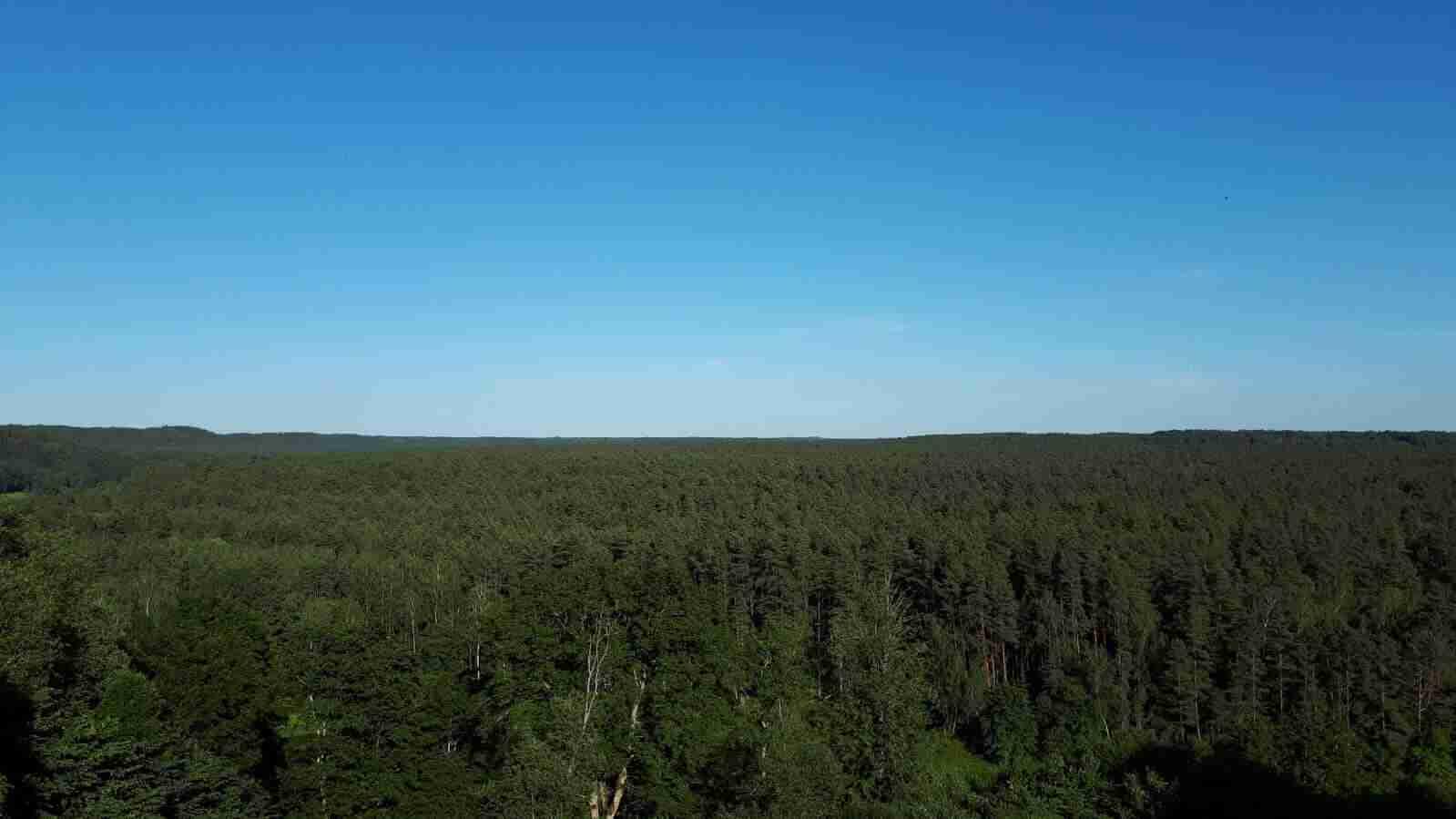 bosco lituania